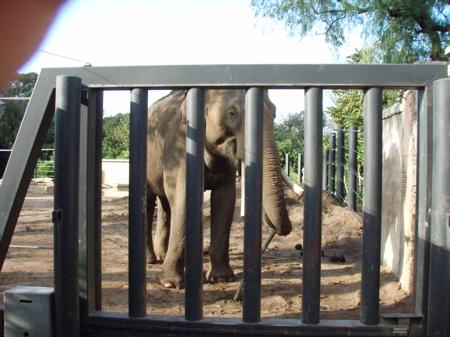Elephant Melbourne Zoo